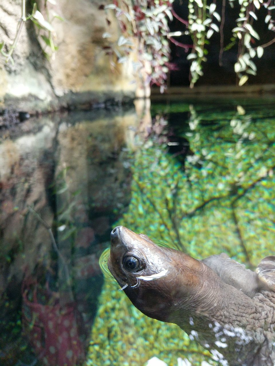 one animal, animal themes, animals in the wild, water, nature, reptile, no people, day, animal wildlife, green color, outdoors, focus on foreground, underwater, close-up, sea life, swimming, beauty in nature, grass, undersea, tortoise shell
