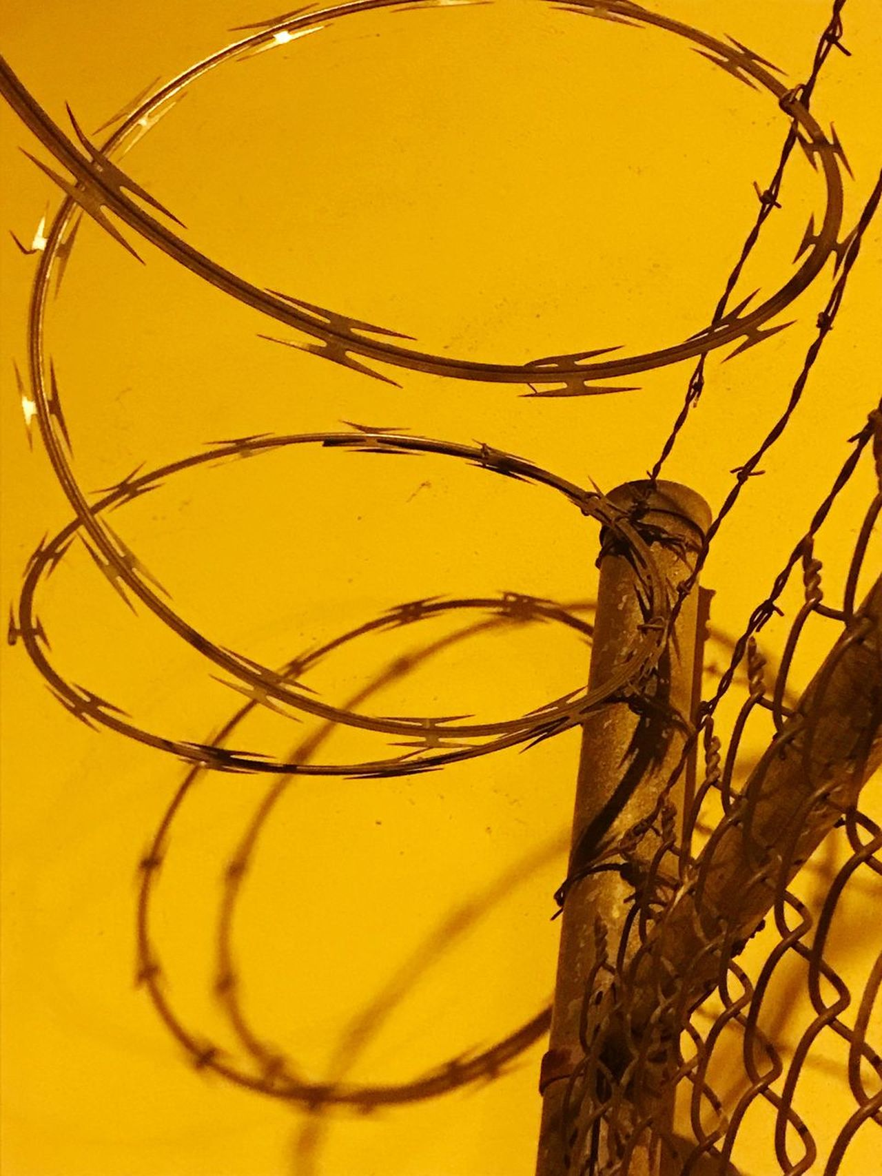 The cage Close-up Yellow No People Day Outdoors Barbed Wire Razor Wire Razor Wire Fence Caged No Freedom