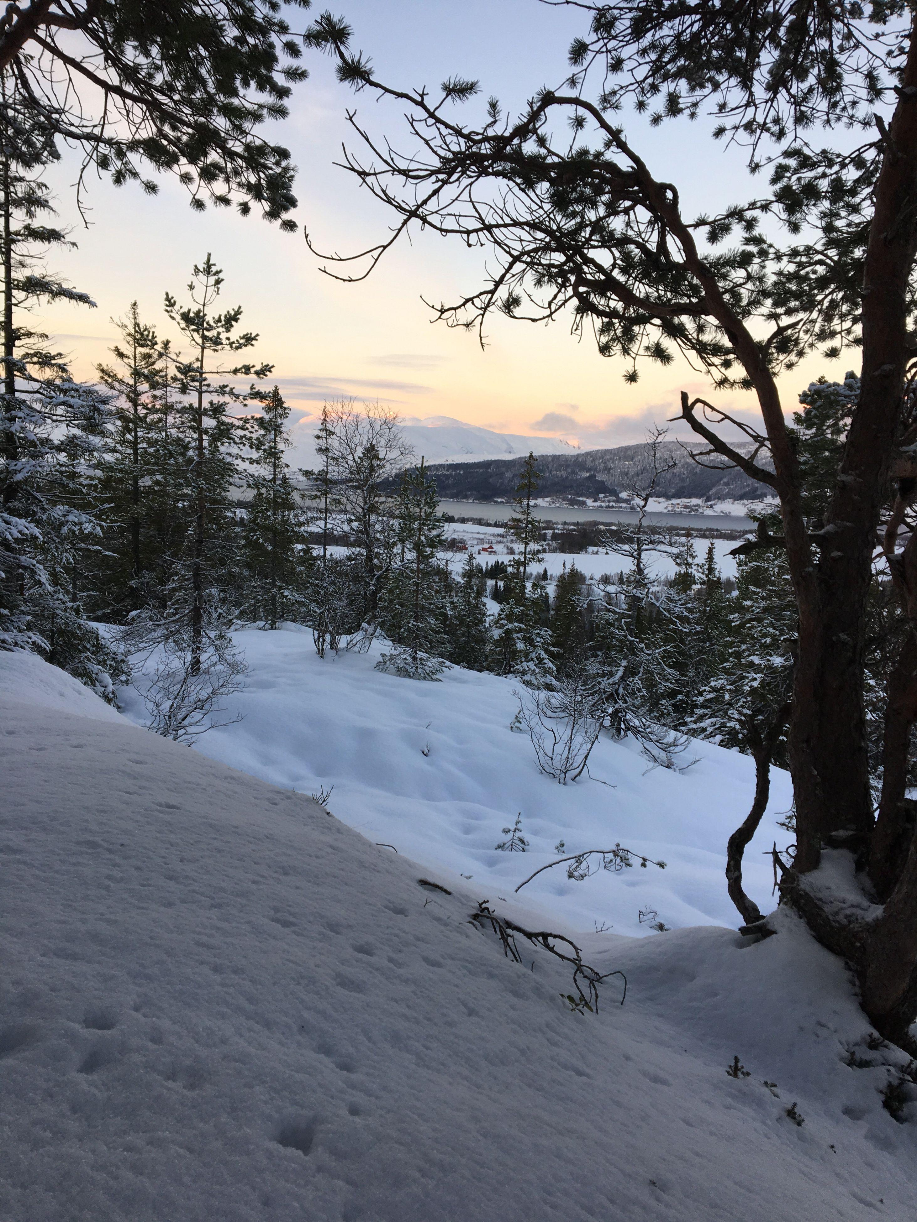 tree, snow, cold temperature, winter, tranquil scene, branch, season, tranquility, scenics, sunset, landscape, sky, nature, beauty in nature, snow covered, non-urban scene, outdoors, solitude, majestic, remote, mountain range, mountain, no people, non urban scene