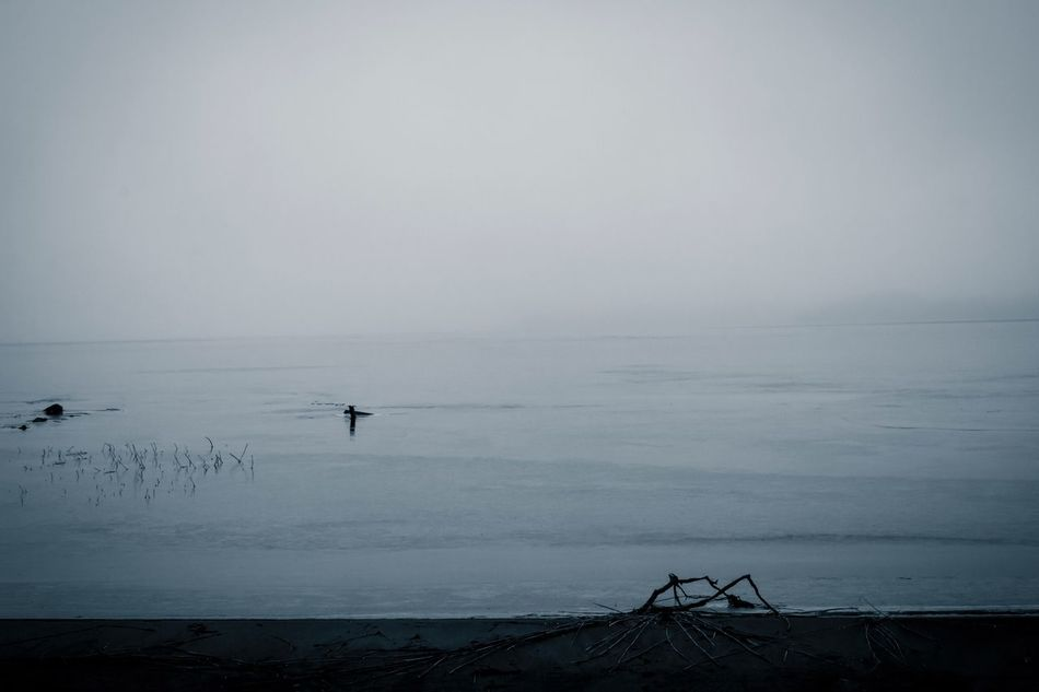 Sea Horizon Over Water Water Scenics Tranquility Nature Tranquil Scene Beauty In Nature Beach Idyllic Outdoors No People Day Foggy Morning Misty Morning Fog Mist Lake View Lakeshore Lakeside Lake Exceptional Photographs Drastic Edit First Eyeem Photo Hello World