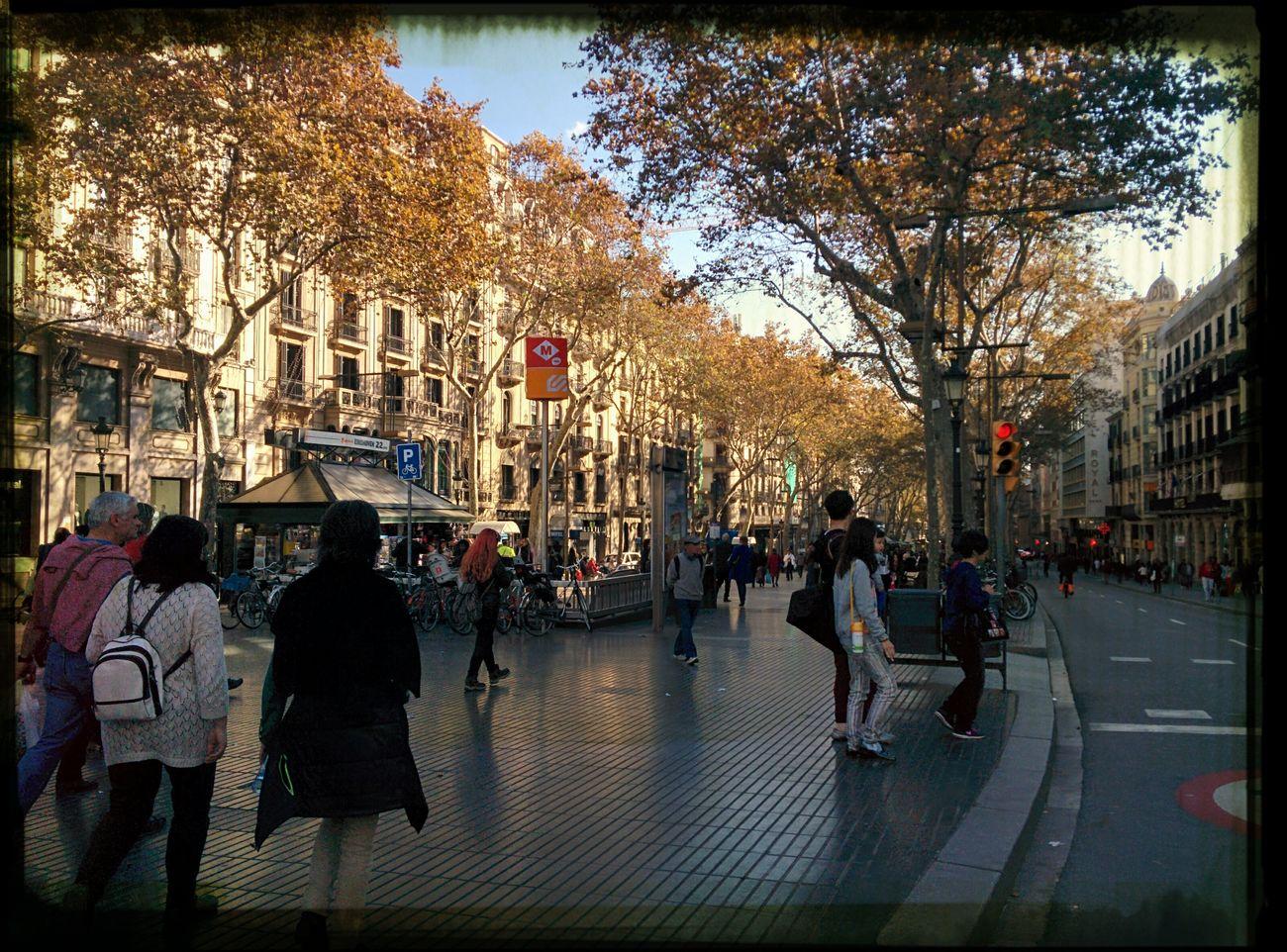 Barcelona, la Rambla en otoño. Syksyinen la Rambla. Barcelona Aitoespanja Syksy Espanja