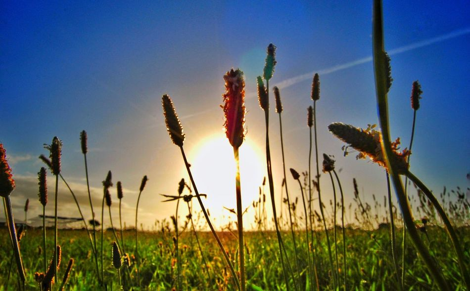 Growth Nature Crop  Plant Field Sunset Rural Scene Summer Cereal Plant Outdoors Agriculture Landscape Sky No People Wheat Day Cloud - Sky Horizon Grassfield Blue Asturias SPAIN EyeEmNewHere