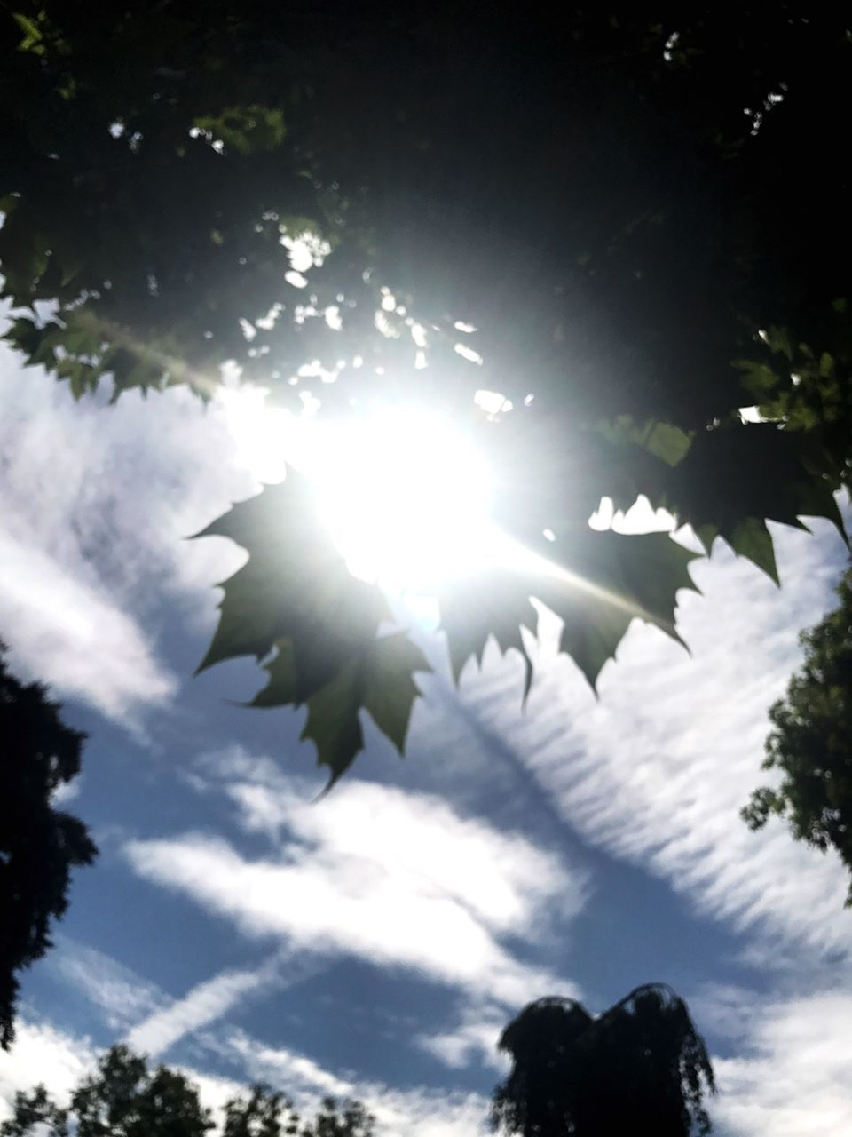 low angle view, sun, sky, tree, sunbeam, lens flare, nature, outdoors, sunlight, no people, cloud - sky, leaf, silhouette, growth, beauty in nature, day, branch, scenics