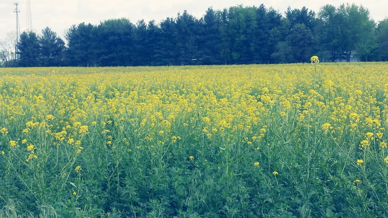 Photography Beauty In Nature Summer Vibes Flower Photography Summer Flowers Flowers Field Of Flowers Field Of Dreams