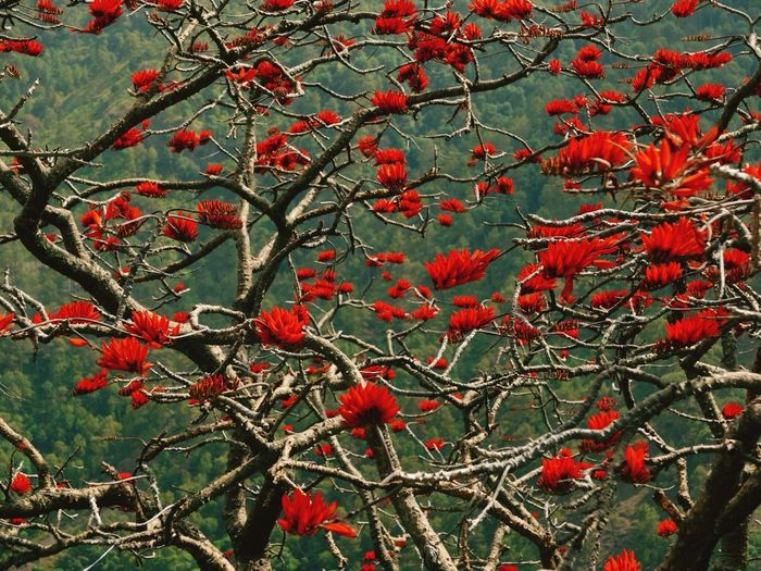 surreal blooms Red Blooms Himalayas Himachal Pradesh, India EyeEm Nature Lover Leica D-lux Typ109