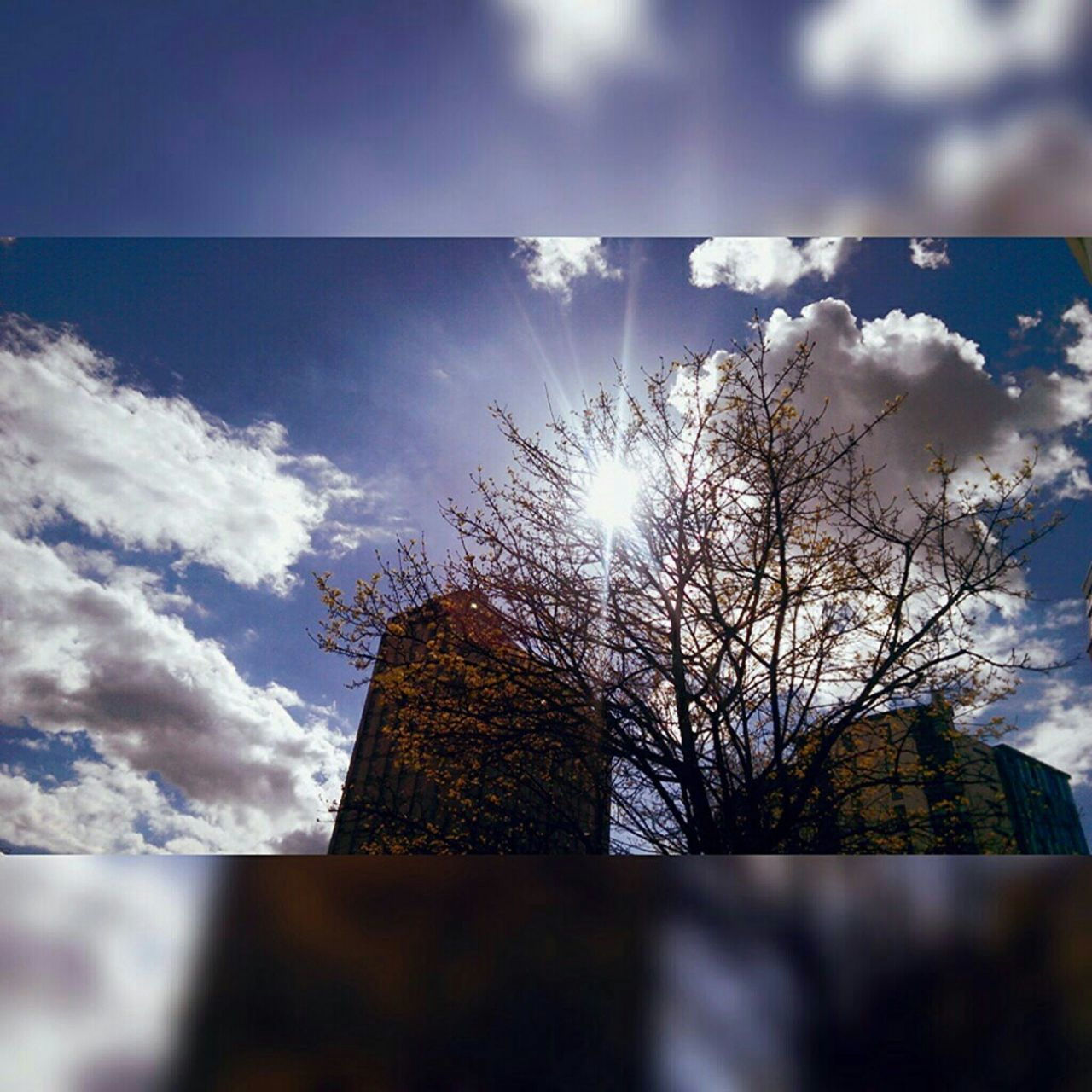 Nature in rhe city☀💙 Adapted To The City Sun Sunbeams Architecture Cityscape Sky Nature No People Tree Branches Sun Through Trees Blue Sky Puffy Clouds Nature And City Beauty In Nature Day Nature And Architecture In Harmony Artistic Photography Skylovers Sky Nature Mobile Photography Spring 2016 Bristol, England EyeEm New Here