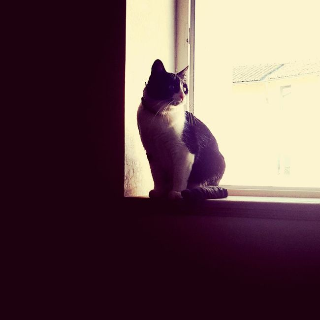Cat Catoftheday Cat Lovers Nikki Window View Window Light Catofmylife Chat Gato Into The Light