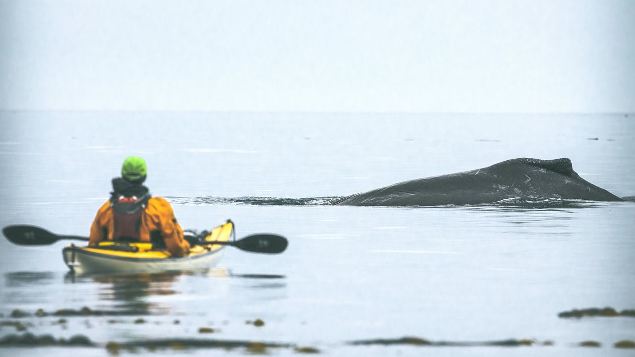 One Person Water Kayak Outdoors Adults Only Adult Kayakers Kayaker WestCoast Powerful Nature Beauty In Nature Leisure Activity Whale Humpback Whale Humpback Scenics Kayaking Transportation Marine Mammals Nature Sea People One Man Only