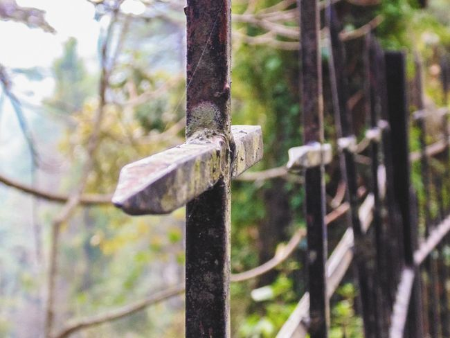 Fence of a cemetry ... Cemetry Fence Christ Cross Iron Rusted Exploring North India Tadaa Community Adventure Selective Focus Travel Photography Depth Of Field Uttarakhand Mussoorie Nature Perspective Freshness Taking Photos Walking Around Tourism Travel Beauty In Nature