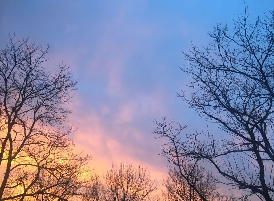 Nofilterneeded Beauty In Nature Sky Cloud - Sky Sunset Treetop Tranquility Outdoors