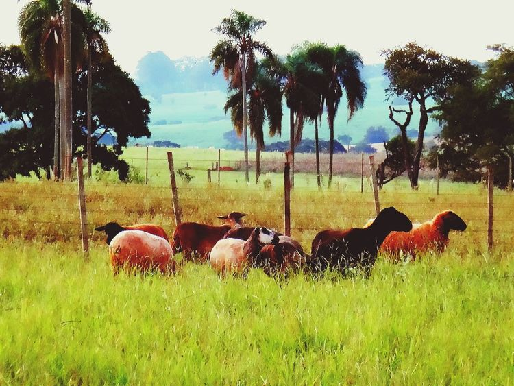 Check This Out Avare SP BRASIL 🇧🇷☀️ Avare Avare Heaven Nature