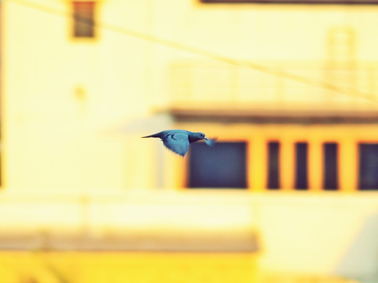 Took this picture from my bedroom window Bird Animal Wildlife Spread Wings Flying Outdoors Sky Nature Pune City Maharashtra_maza Maharashtra_ig Puneclickarts Punediaries Puneinstagrammers Pune The Great Outdoors - 2017 EyeEm Awards