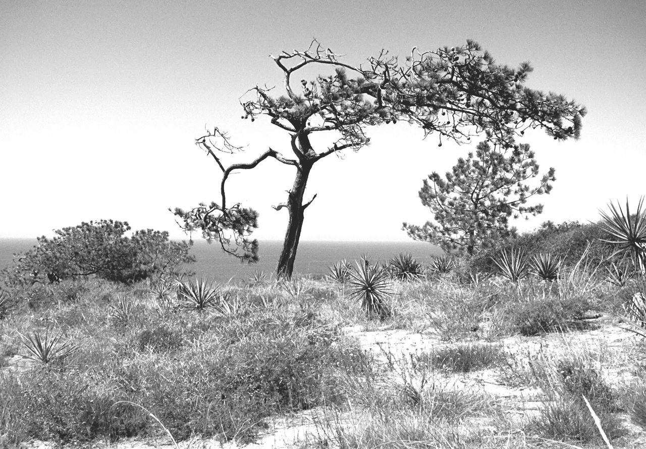 Torreypines San Diego California Hiking Nature Desolate Beauty Blackandwhite Landscape