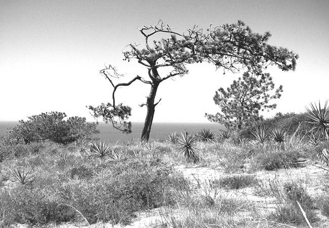 Torreypines San Diego California Hiking Nature Desolate Beauty Blackandwhite Landscape