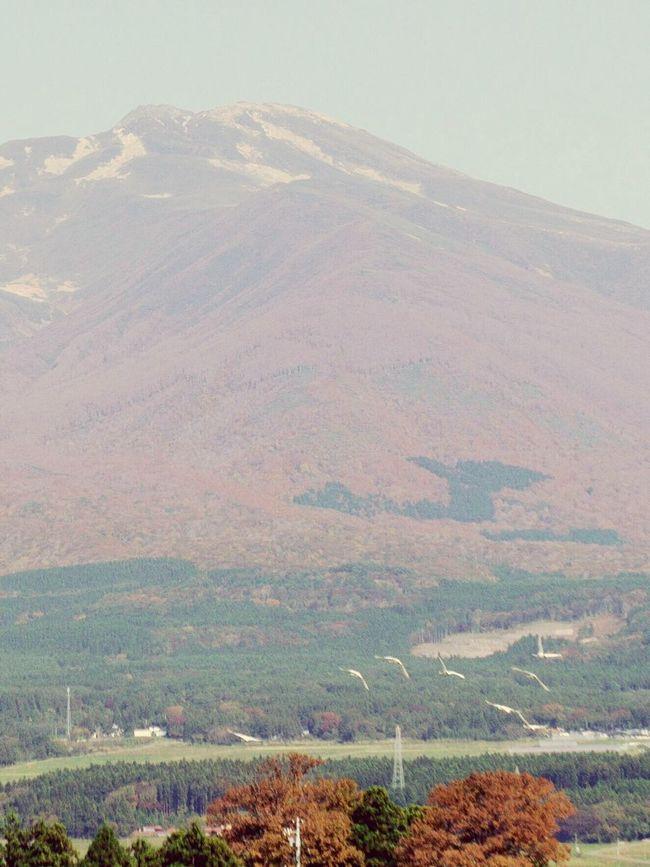 鳥海山と白鳥 Mt.chokaisan Swan Swans Birds Bird Mountain Wintercoming Wintercomes