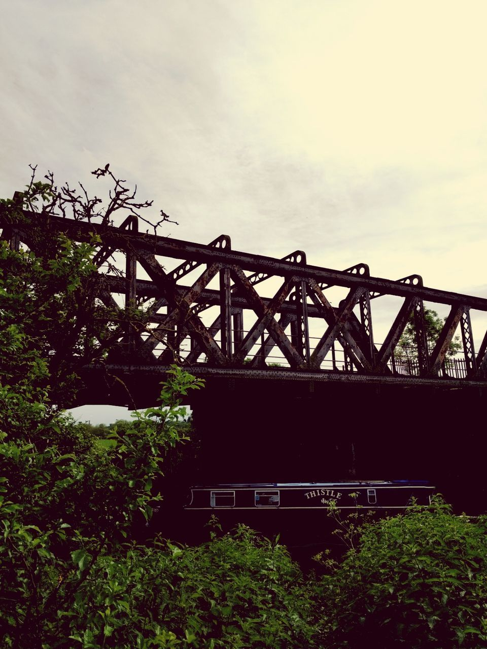 built structure, outdoors, sky, low angle view, day, architecture, no people, bridge - man made structure, plant, growth, tree, nature