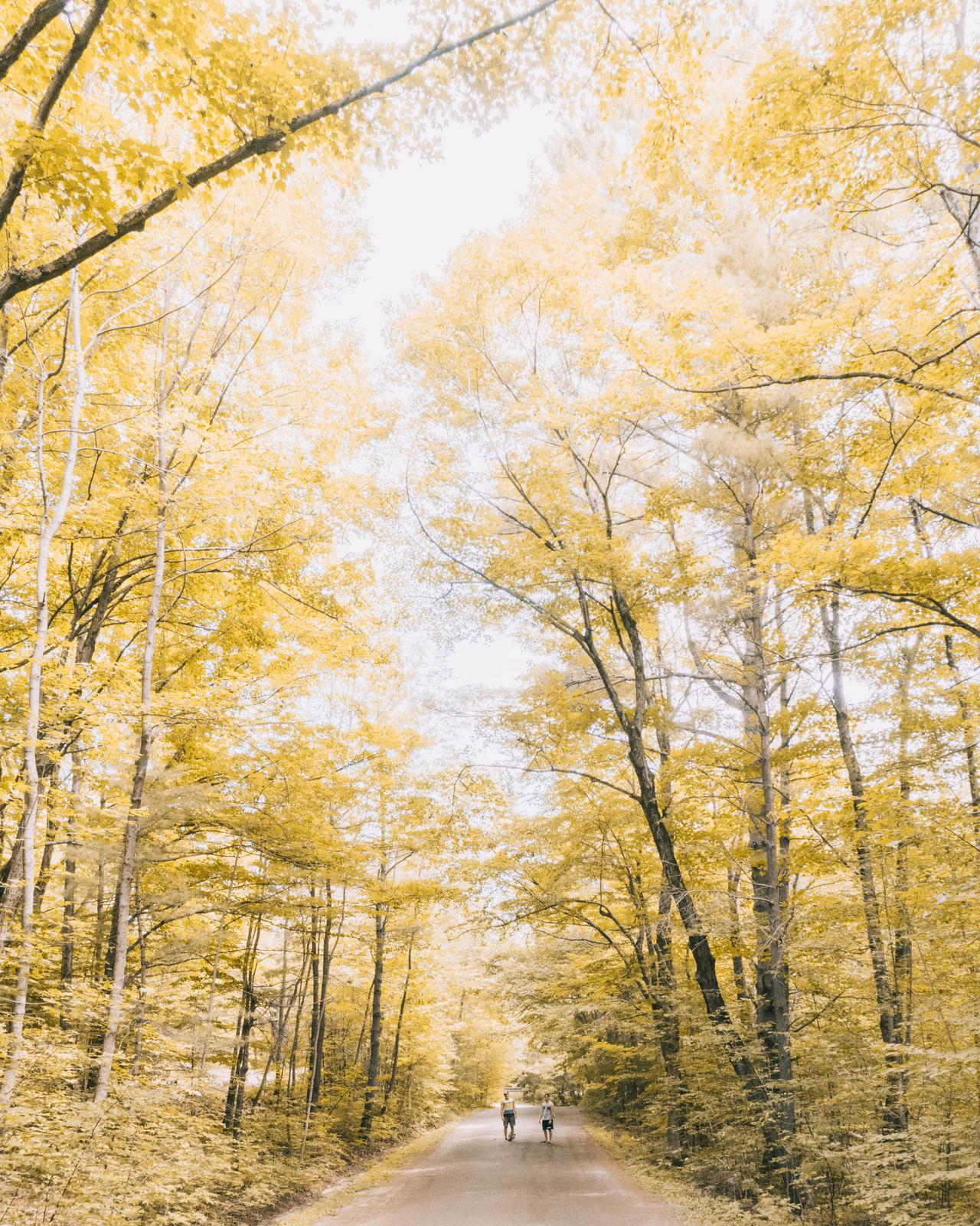 Algonquin Park Algonquinprovincialpark Autumn Forest Gatineau Nature Ottawa Rural Scene Sony Sony A6300
