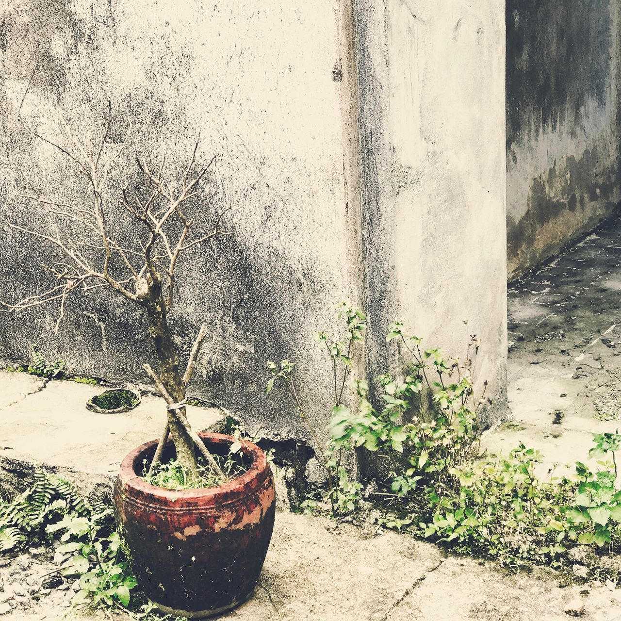 growth, plant, potted plant, no people, nature, day, outdoors, leaf, tree, beauty in nature, close-up, freshness