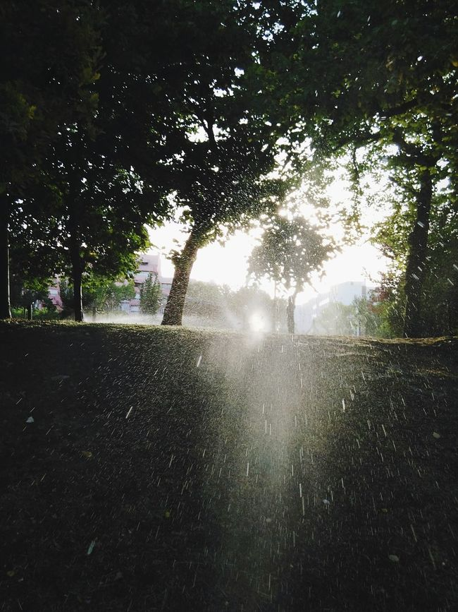 Lisbon Sprinkle Nature Water Trees Morning