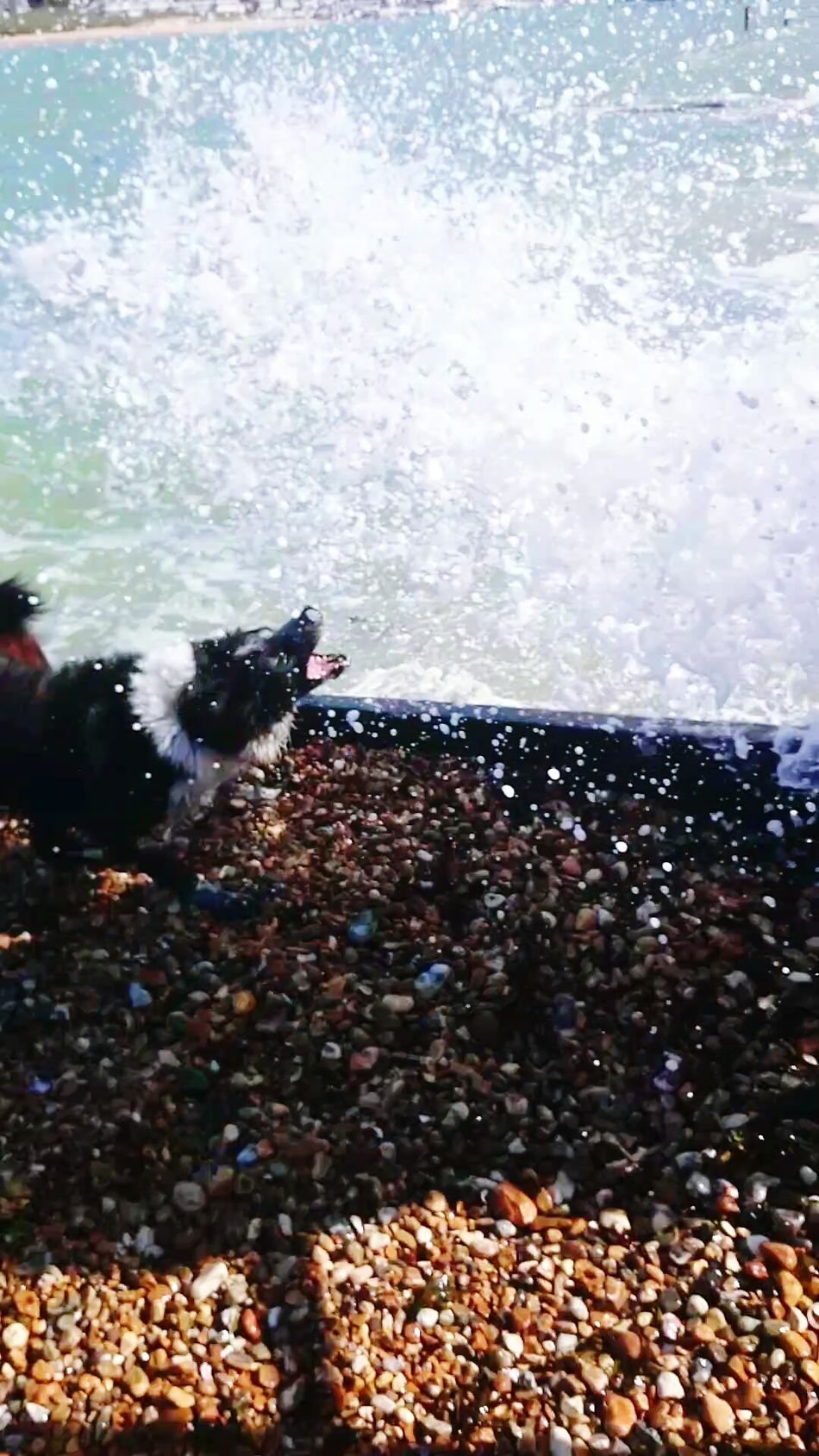 Catching Waves Its A Dogs Life Action Shot  Perfect Day