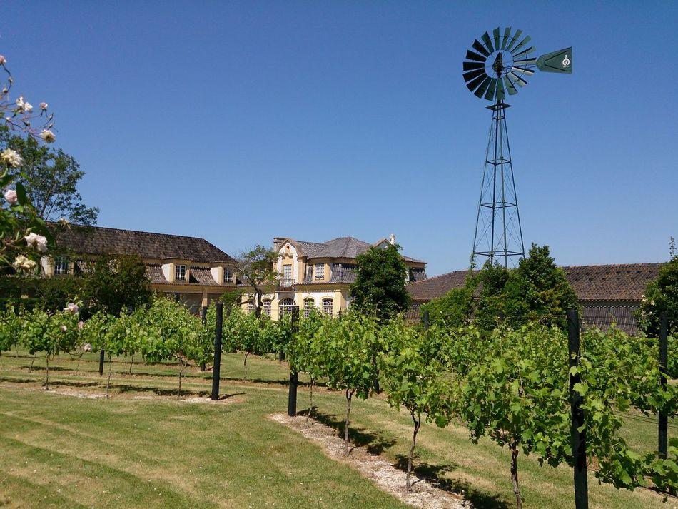 Winery Wine Tourism Azeitao Windmill