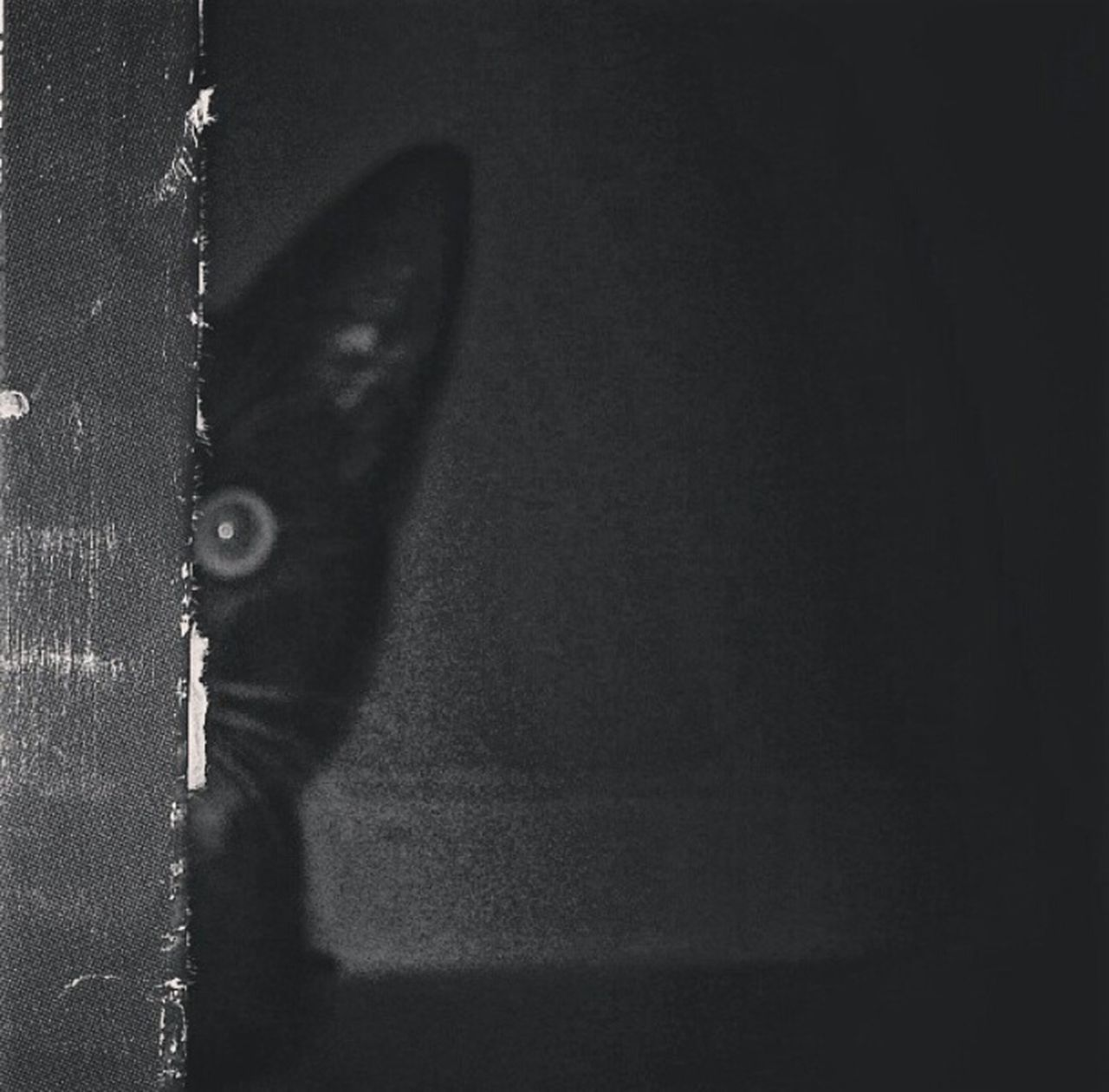 Picturing Individuality Check This Out B&w Photography B&W Obsession Black & White You Looking At Me????? Cats Of EyeEm