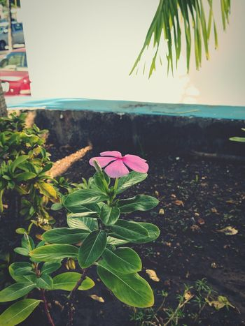 Flor Beach Nature Sea Green Color Growth Leaf Beauty In Nature