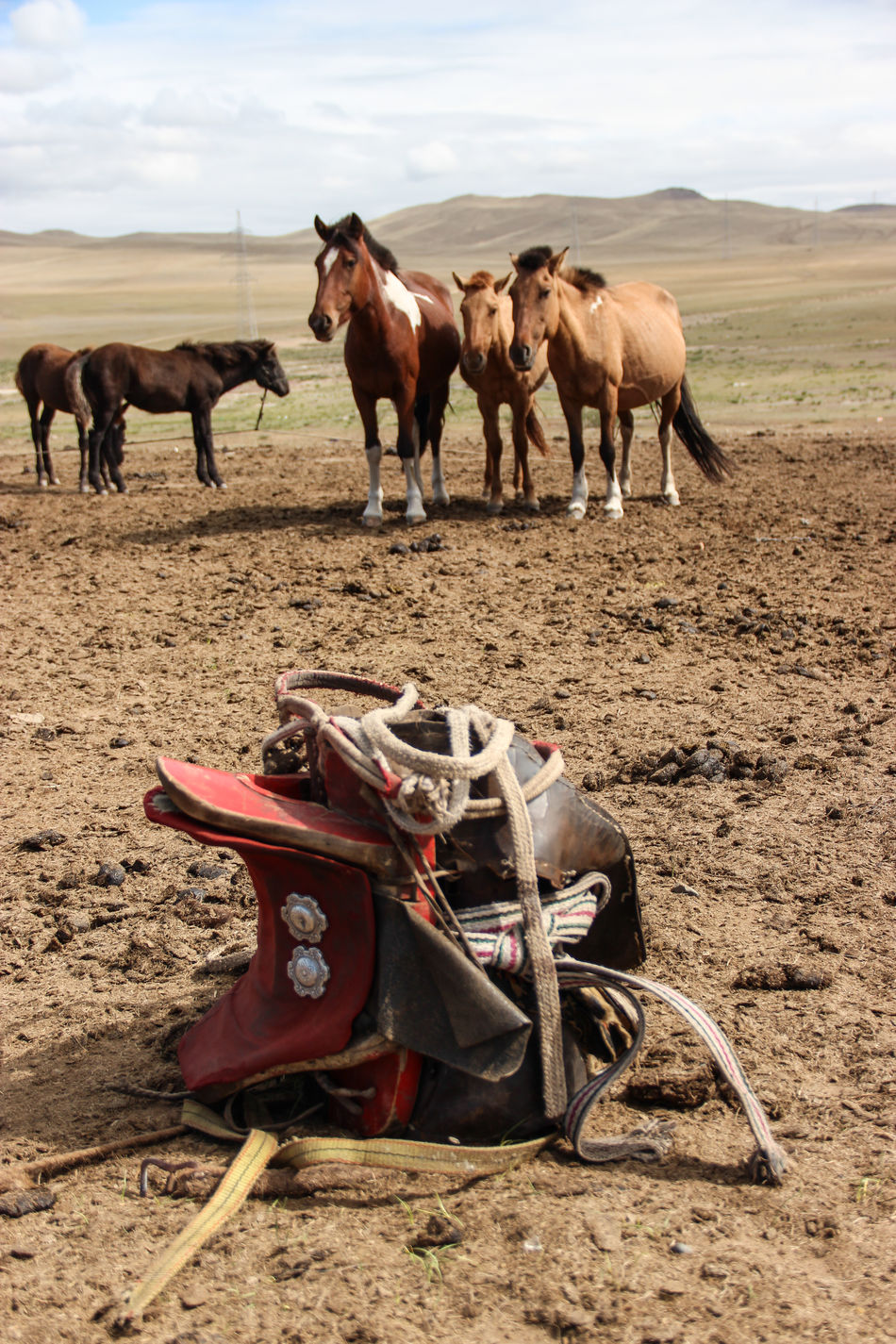 """""""mongolian saddle"""" Animal Animal Themes Animals In The Wild Brown Camel Cowboy Day Domestic Animals Equipment Farm Farm Life Hills Horse Horses Lieblingsteil Livestock Mammal Nature Nature No People Outdoor Outdoors Saddle Soil Wildlife"""