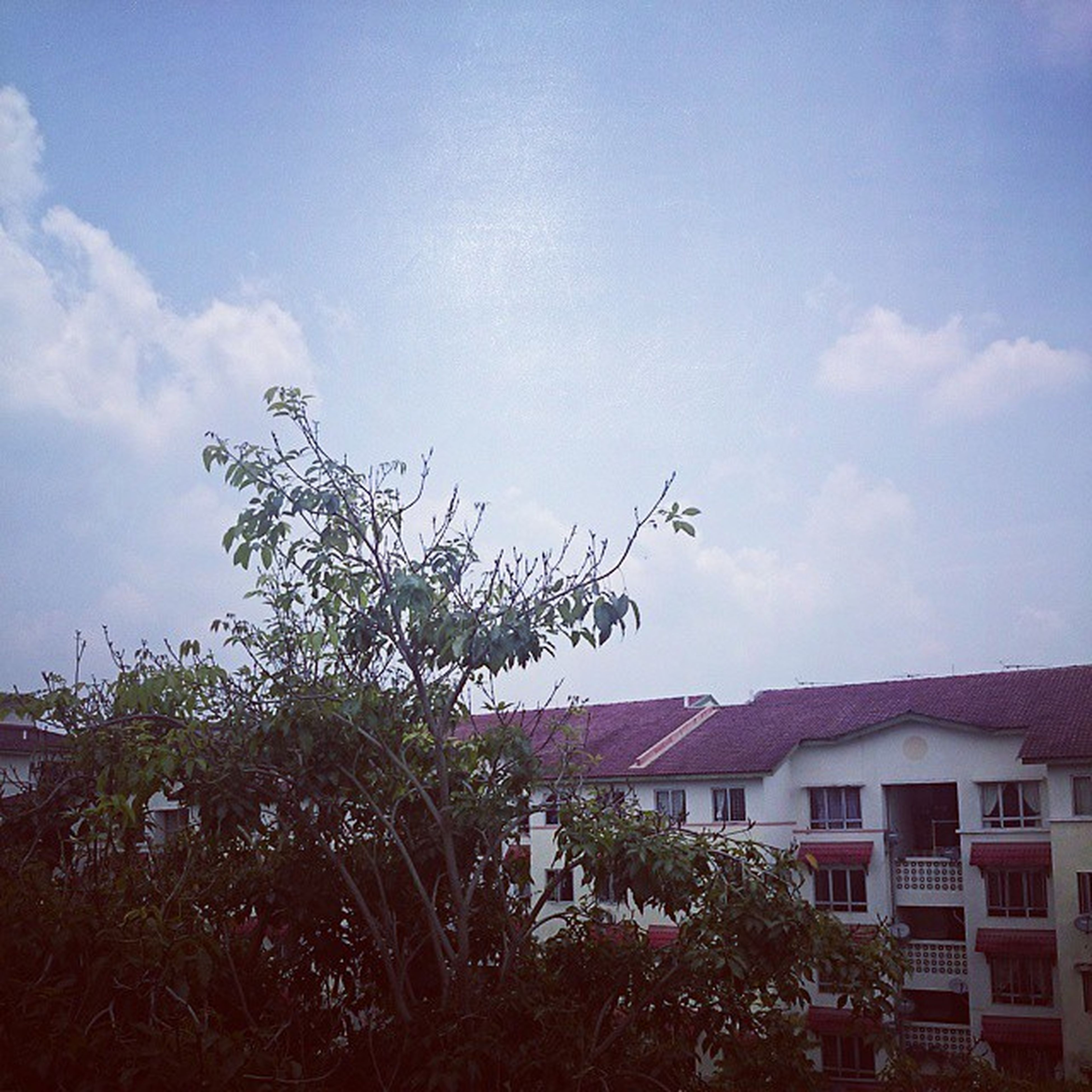 building exterior, architecture, built structure, sky, tree, house, residential building, residential structure, blue, low angle view, growth, cloud, cloud - sky, day, residential district, outdoors, no people, city, nature, building