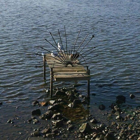 NL River Bird NL Arcen