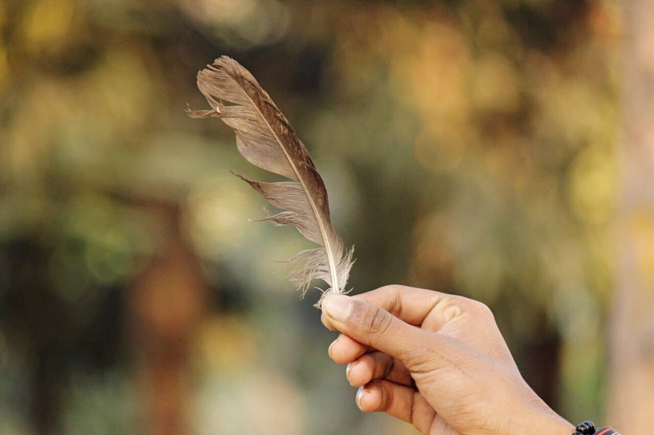 Close-up Focus On Foreground Human Hand One Person Nature Day Outdoors Adapted To The City EyeEm Gallery Colour Of Life Canonphotography Wildlife & Nature Hope Solace Lens Beautiful God Creativity Wings Believe For Best  Love EyeEmNewHere