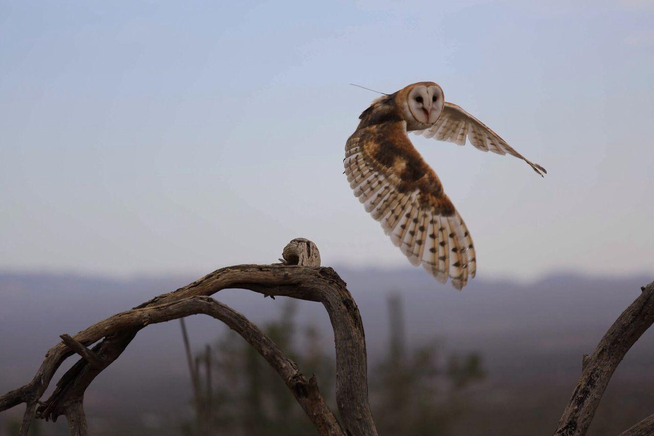 Beautiful stock photos of birds, Alertness, Animal Themes, Animal Wing, Bird