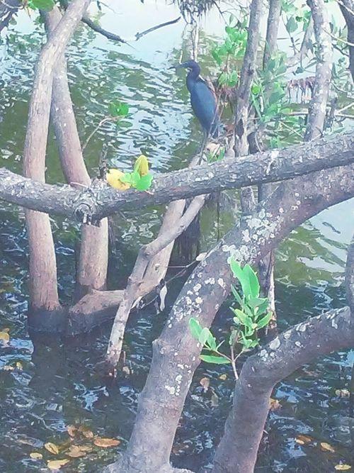 Taking Photos Photographer Natrual Beauty  Bird Water Capturing Freedom