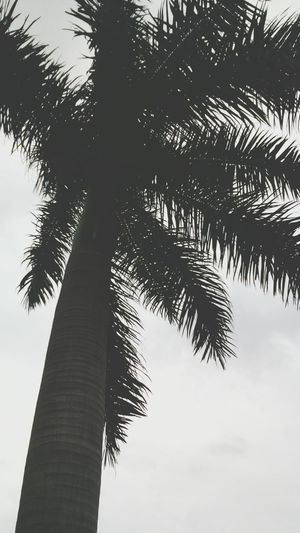 Palmera Nublado Outumn Blanco & Negro  One Photo Nature Photography Palm Tree Black Day Nature Scenes. ...