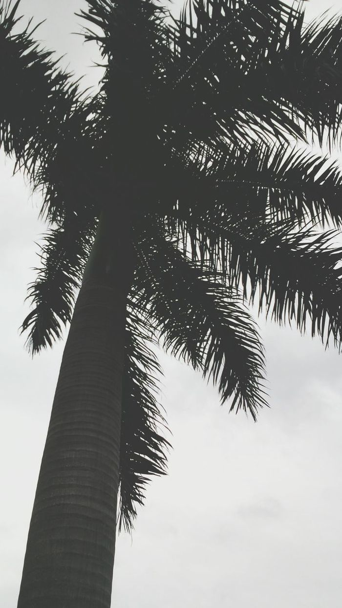 Palmera Nublado Outumn Blanco & Negro  One Photo Nature Photography Palm Tree Black Day Nature Scenes. ...