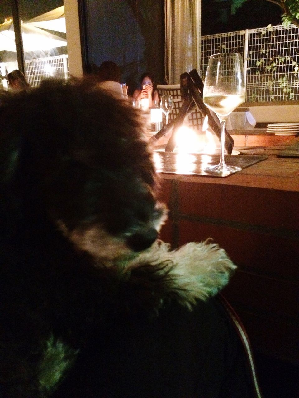 animal themes, dog, domestic animals, pets, mammal, indoors, table, one animal, chair, no people, night