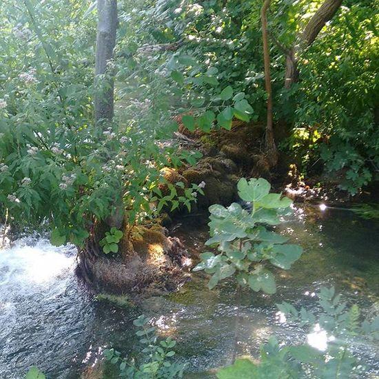 Ohnefilter Filterfrei Keinfilter Natur Kroatien Kroatien2015 Croatia Fluss Wasser Baum Bäume Stein
