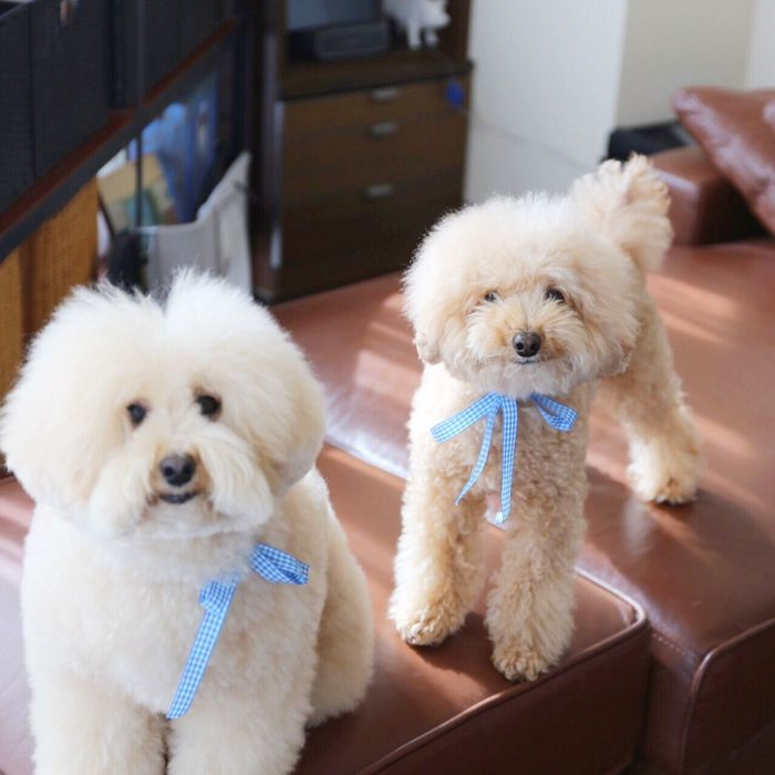 DogLove Cute Pets I Love My Dog Toypoodle HappyBirthday Birthday Party Enjoying Life Dogs Cutedogs My Toypoodle Smile