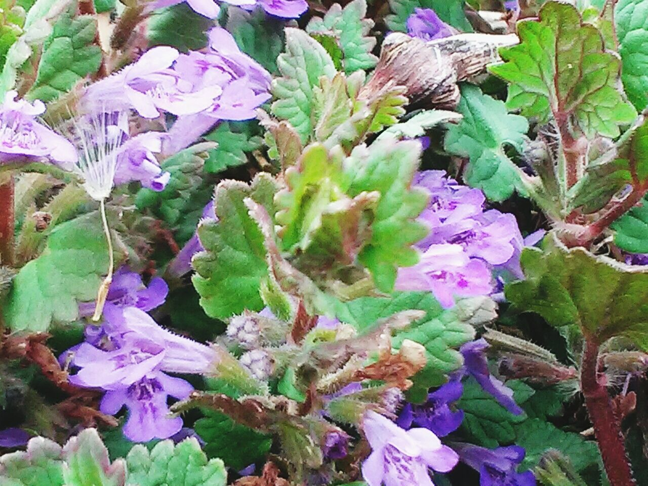plant, flower, growth, nature, leaf, fragility, no people, purple, beauty in nature, day, outdoors, freshness, close-up, flower head