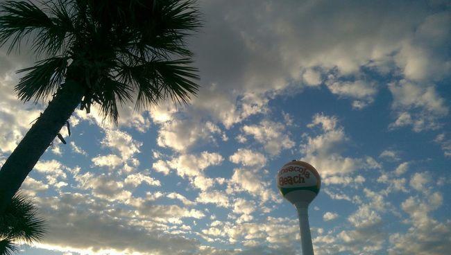 Florida Beach Pensacola Beach Trees Sky_collection Summer2015 Palm Trees Lolypop