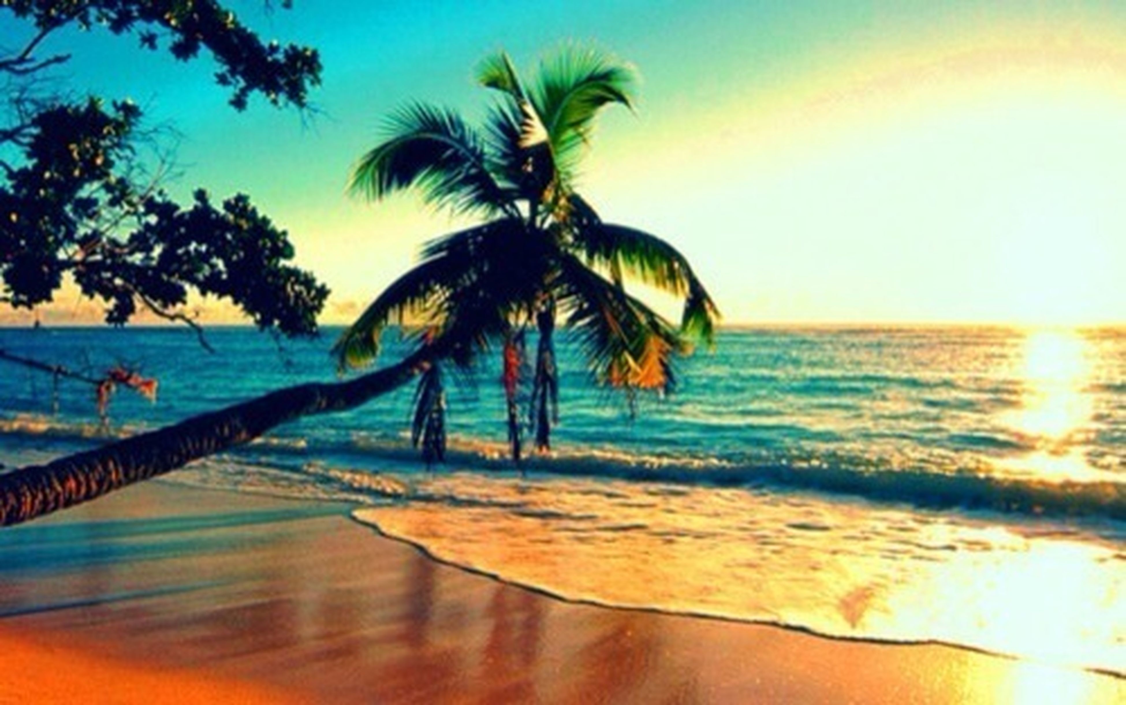 sea, beach, horizon over water, water, palm tree, sunset, shore, sand, sky, scenics, tranquil scene, beauty in nature, tranquility, nature, vacations, leisure activity, lifestyles, sunlight