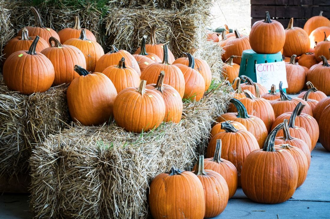 Agriculture Autumn Bale  Barn Celebration Event Crop  Food Gourd Grass Halloween Harvesting Hay Holiday - Event Jack O' Lantern Multi Colored No People Orange Color Outdoors Plant Pumpkin Rural Scene Scarecrow Squash - Vegetable Straw Vegetable