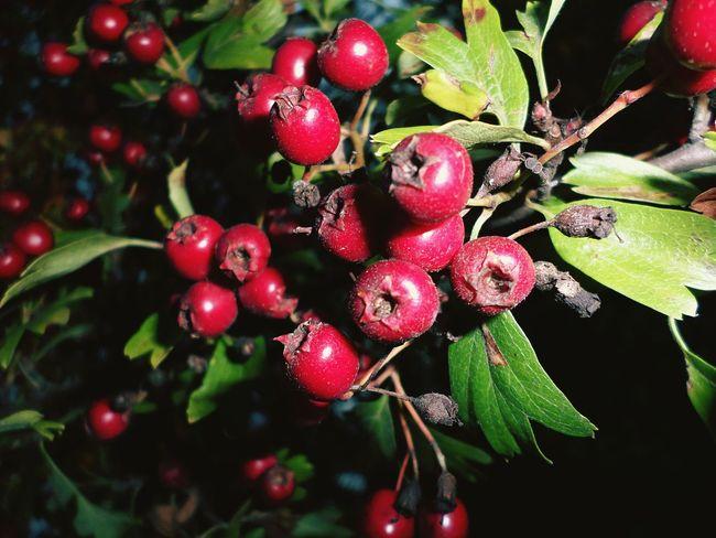 EyeEm Nature Lover Nature On Your Doorstep Essex United Kingdom Autumn South Ockendon