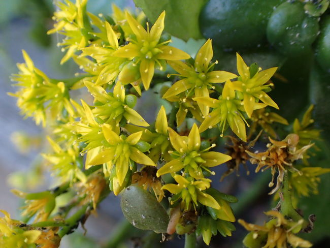 Close-up Flower Fragility Freshness Growth Nature Plant Tiny Flowers Yellow Flowers
