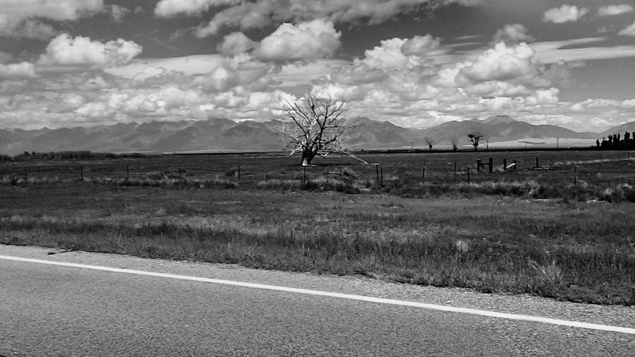 Tree Outside Of Alamosa Colorado Blackandwhitephotography Justgoshoot Ferrouswheelsphotography Nofilter