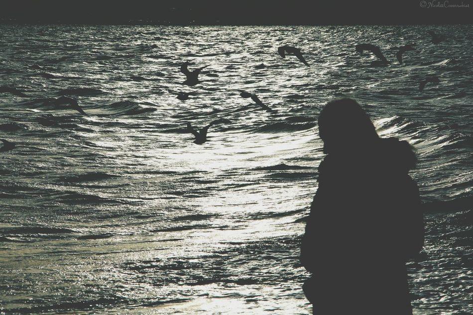 Beach Sunset Capture The Moment Flying Bird Mar