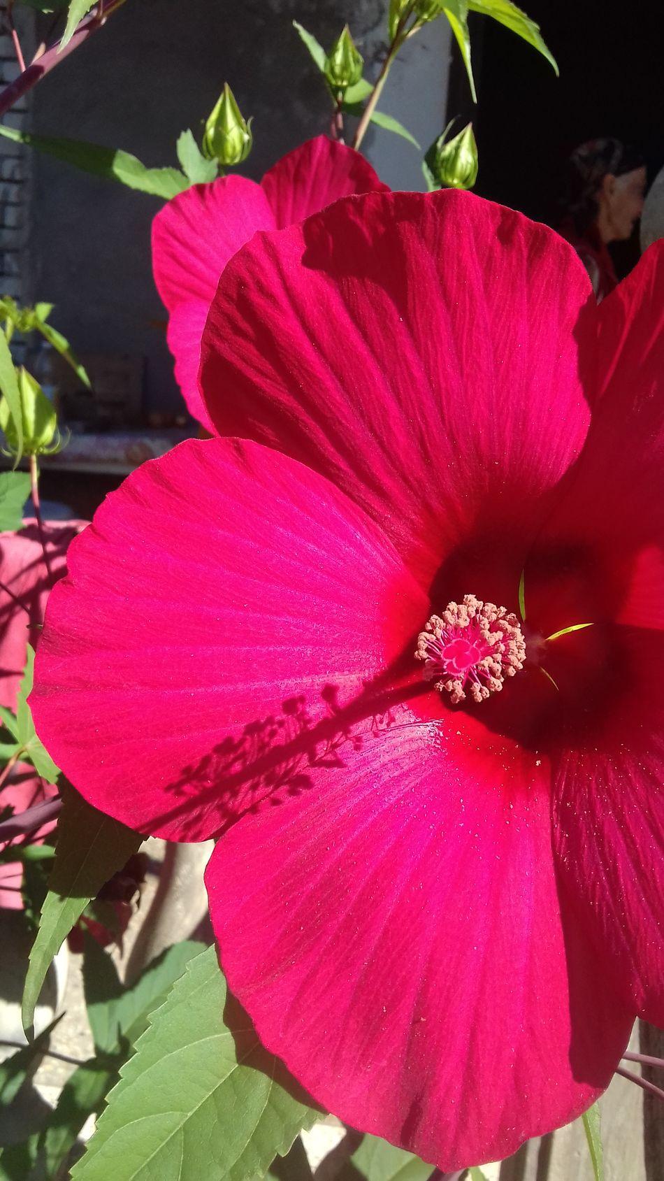 Samsungphotography Photography Mobilephotography Mobile Photography Hello World Good Times საქართველო♥ Flowers Flowers, Nature And Beauty Beautiful Day Kutaisi ქუთაისი Georgia Saqartvelo Suny Day ☀️ Suny Day Sunyday🌞