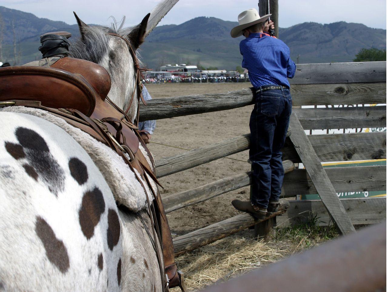 Beautiful stock photos of cowboy,  Animal Themes,  Blue,  Boys,  Casual Clothing