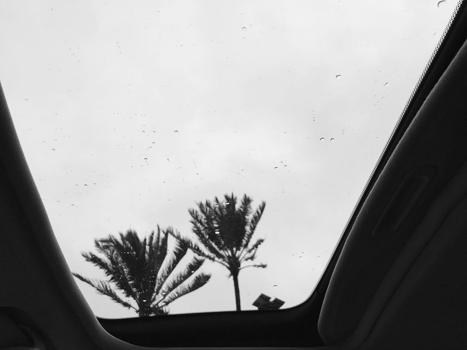 There's a storm brewing Hawaii Car Window Looking Through Window Sky Nature Stormy Hawaii Life EyeEm Best Shots Honolulu  Palm Tree Paradise Escape Travel Destinations Travel Oceanside