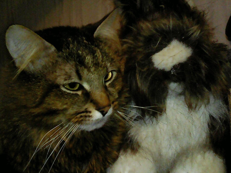 Relaxing Taking Photos мойкотик✌ котэ Серый кот СерыйКот Catsagram Cat Greycat Mypet